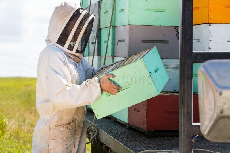 在蜂房的蜂农运载的蜂窝条板箱 免版税库存照片