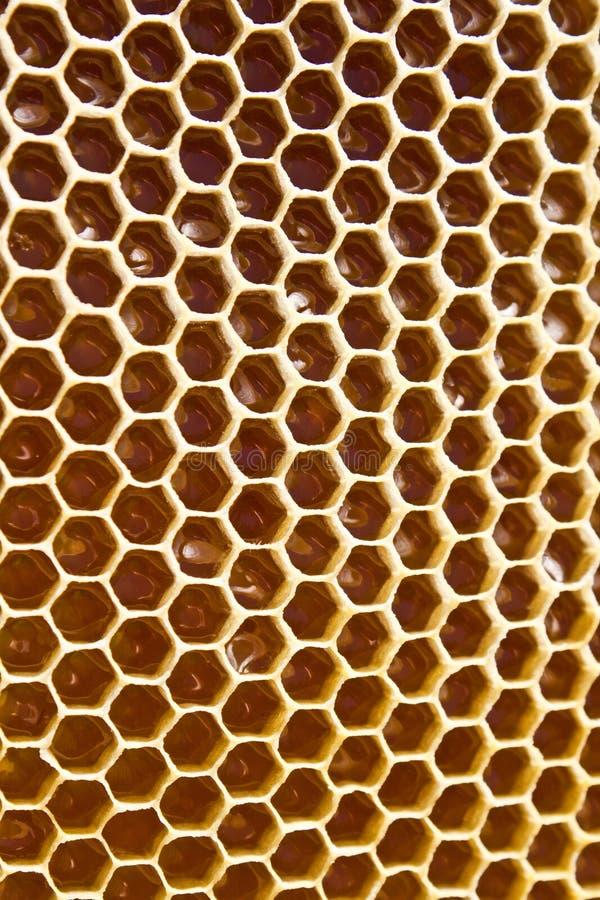 在蜂窝的蜂蜜 库存图片