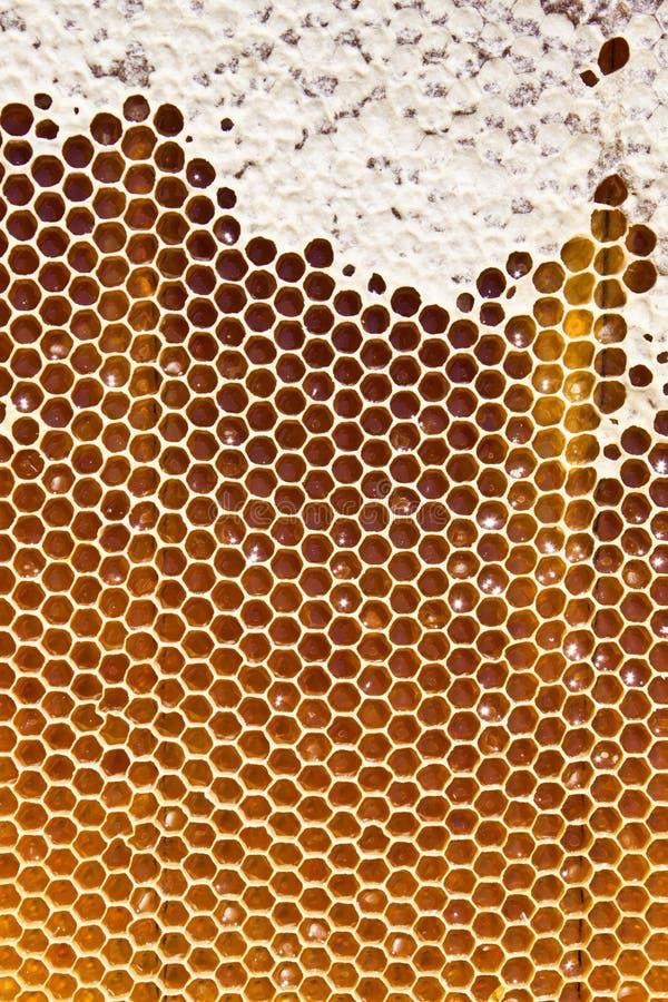 在蜂窝的蜂蜜 免版税库存照片