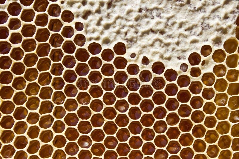 在蜂窝的蜂蜜 图库摄影