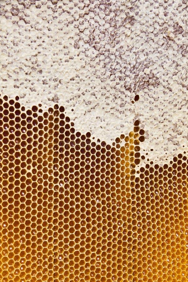 在蜂窝的蜂蜜 库存照片