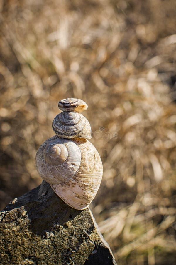 在蜗牛的蜗牛 免版税库存照片