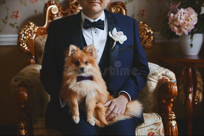 在蝶形领结的Pomeranian小狗坐新郎膝盖  免版税库存照片