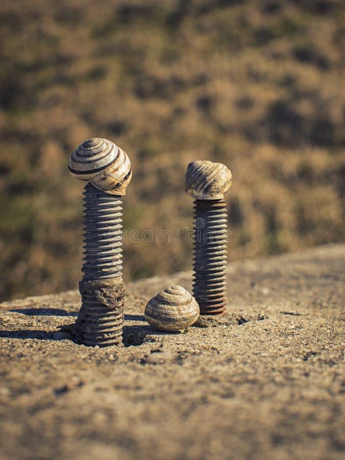 在螺丝的蜗牛 库存照片