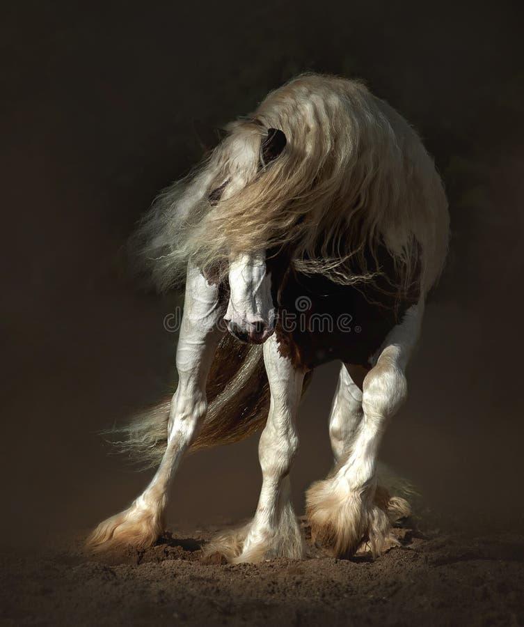 在行动特写镜头的修补破铜铁者马在黑暗的背景 库存图片