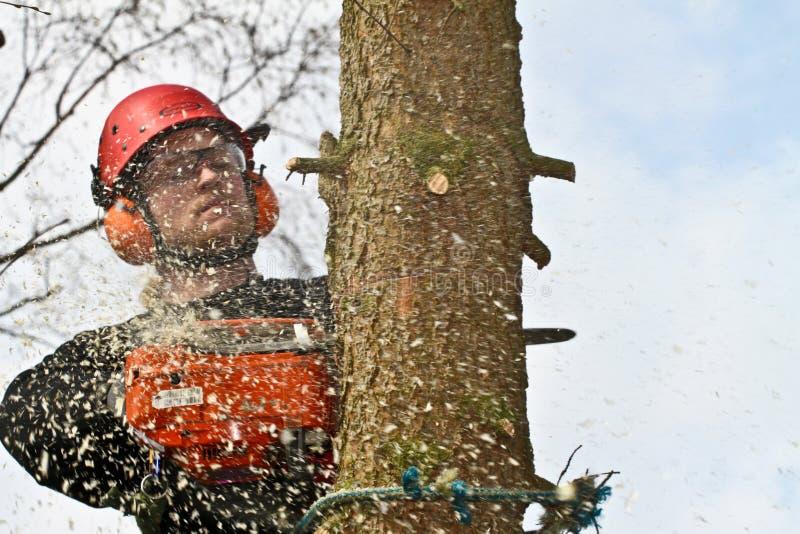 在行动的伐木工人特写镜头在丹麦 库存图片