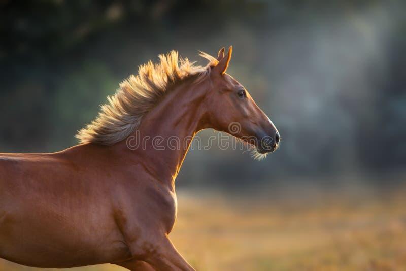 在行动的马画象 库存图片