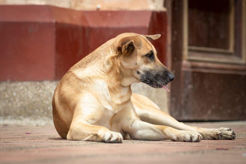 在街道上放弃的无家可归和饥饿的狗 免版税库存图片