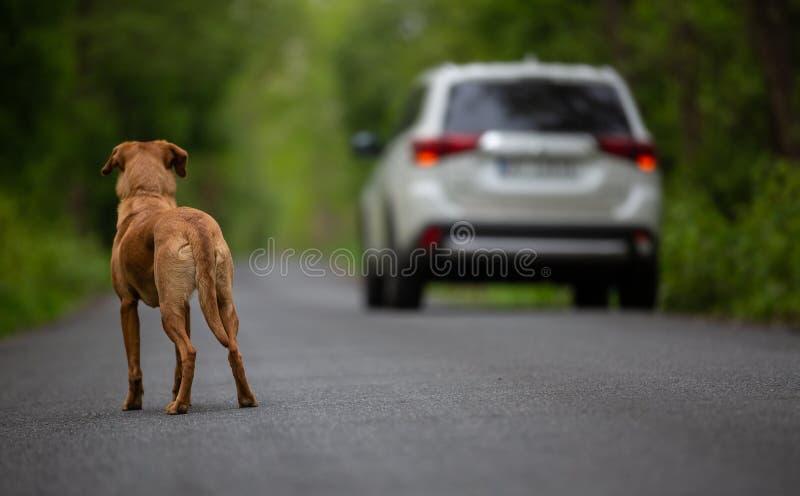 在街道上的一条被放弃的狗 库存照片