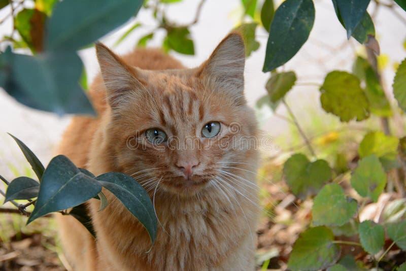 在街道上的可爱的红色猫 免版税库存图片