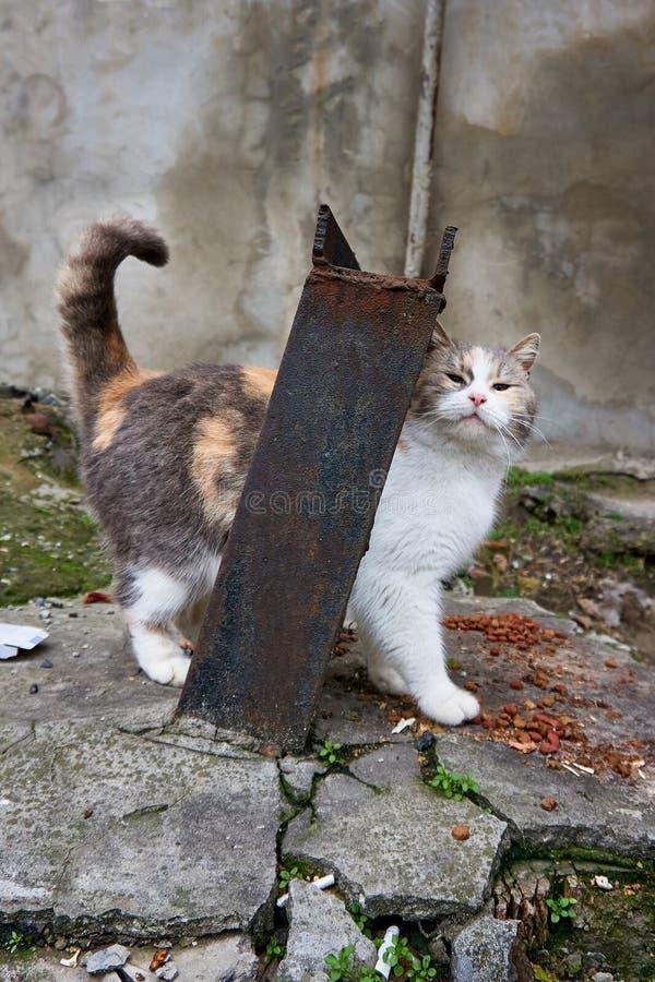 在街道上的无家可归的猫采取从一个人的喜爱并且吃 库存照片