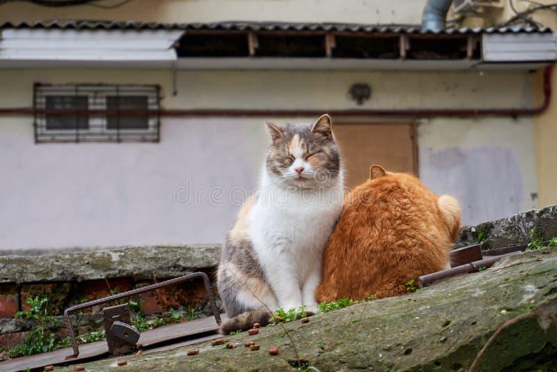 在街道上的无家可归的猫采取从一个人的喜爱并且吃 库存图片