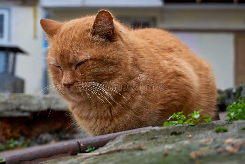 在街道上的无家可归的猫采取从一个人的喜爱并且吃 免版税库存照片