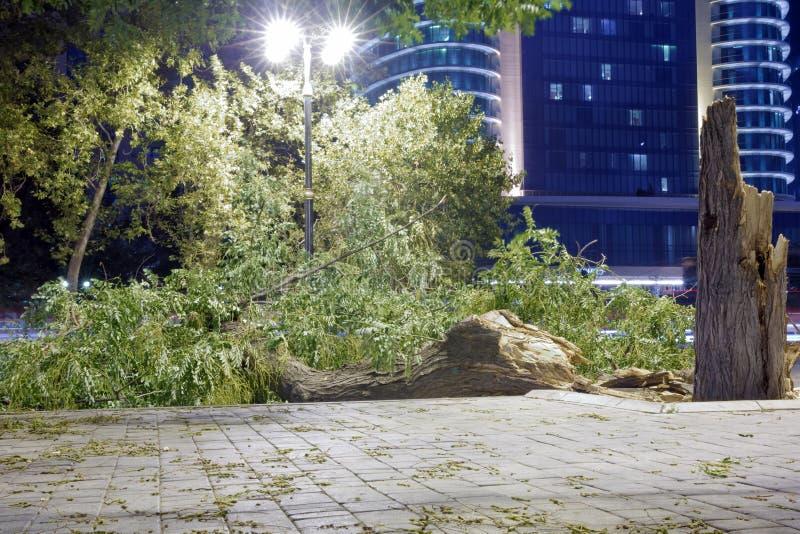 在街道上的树摔倒在地并且下跌 树在晚上跌倒了并且摔倒在地 树落 库存照片
