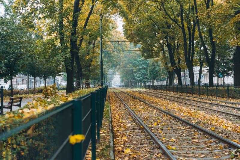 在街道上的绿色树围拢的空的铁路 免版税库存照片