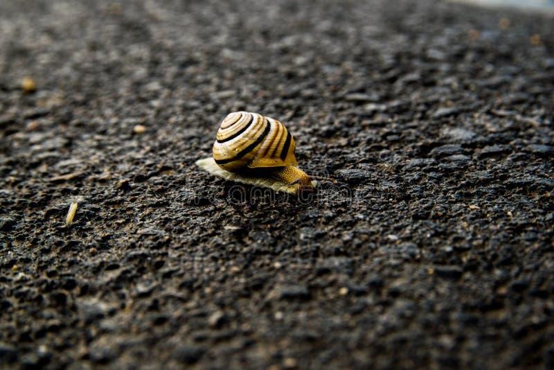 在街道上的蜗牛从点燃的黑暗 库存照片