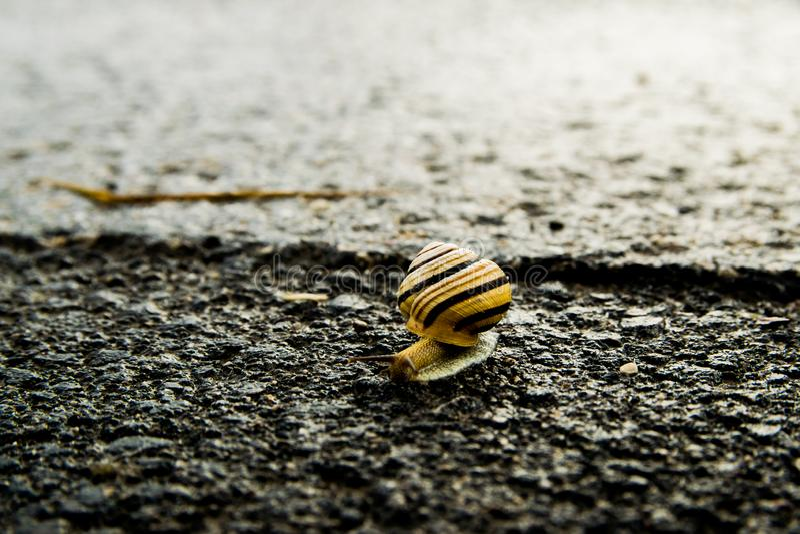 在街道上的蜗牛从点燃的黑暗 免版税库存图片