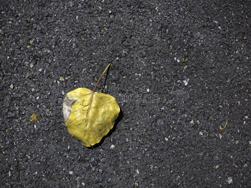 在街道上的黄色叶子 库存图片
