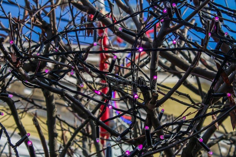在街道树的灼烧的电灯泡诗歌选 免版税库存照片