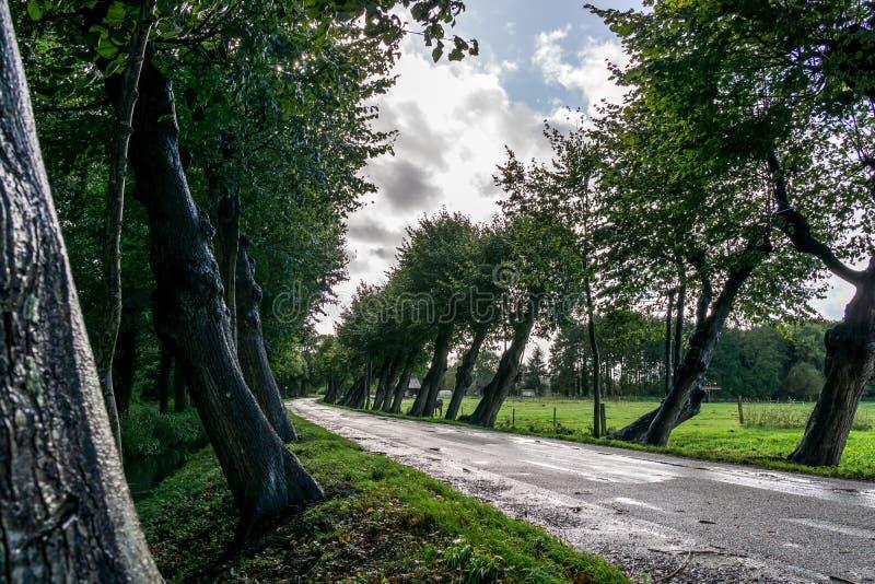 在街道的多雨倾斜树 库存照片