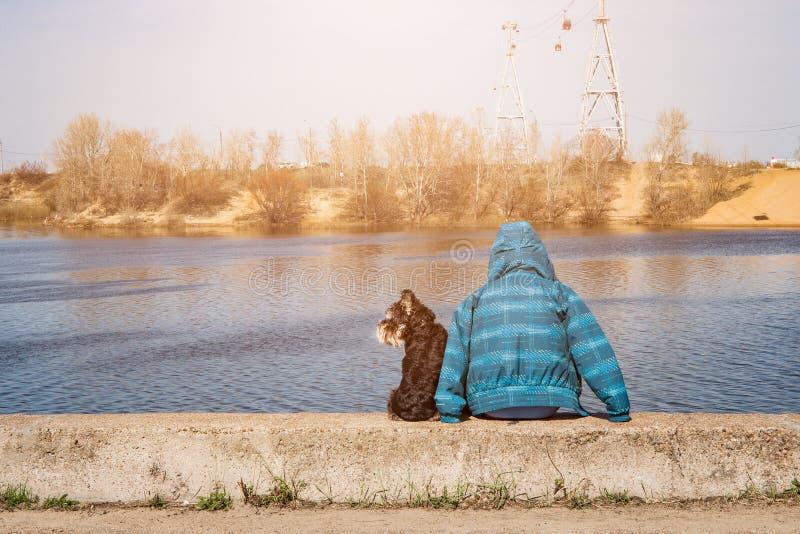 在街道的狗在一个夏天 免版税库存图片