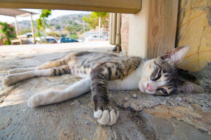 在街道的猫 免版税库存照片