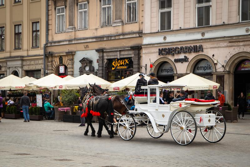 在街道的马支架在克拉科夫 库存图片