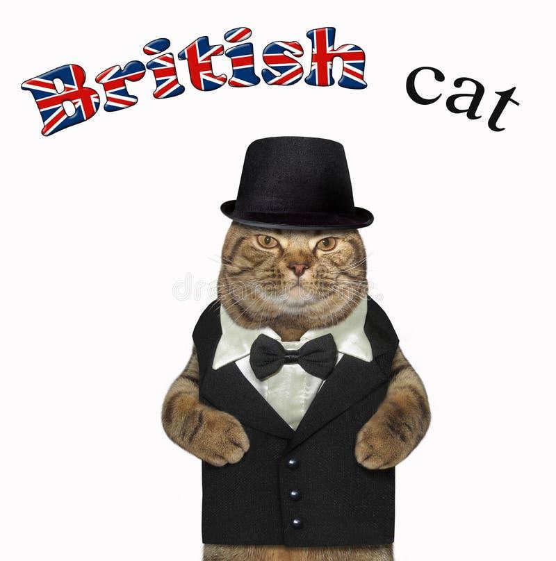 在衣服2的英国猫 库存照片