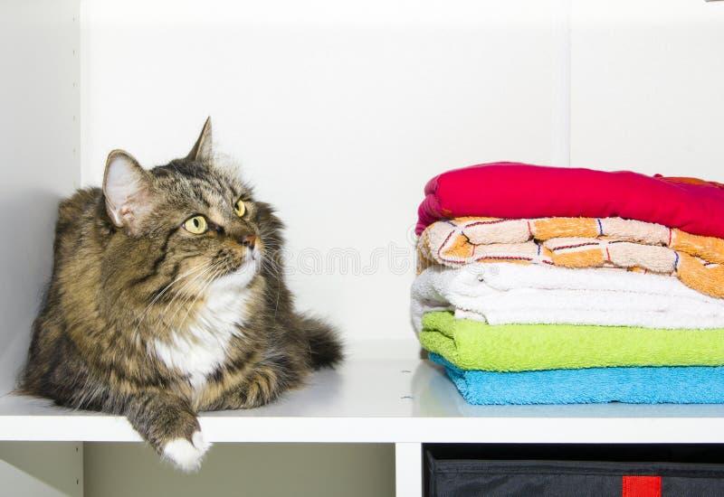 在衣橱的猫和毛巾 库存照片