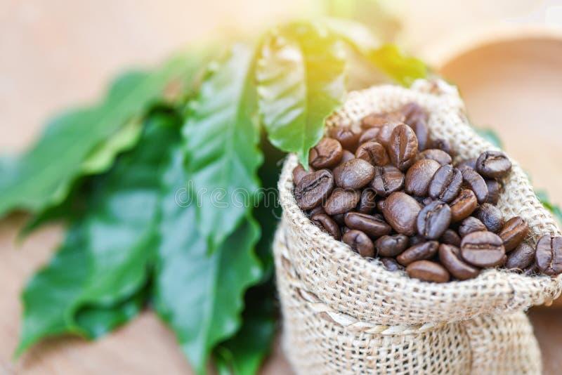 在袋子-在大袋的烤咖啡的咖啡豆有在木桌背景的绿色叶子的早晨 库存照片