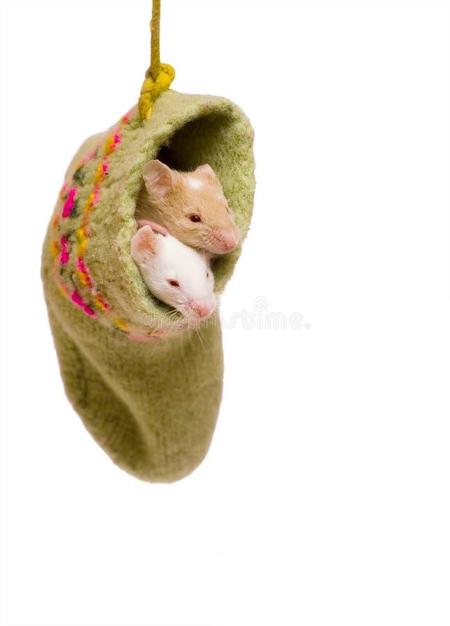 在袜子的鼠标 免版税库存照片