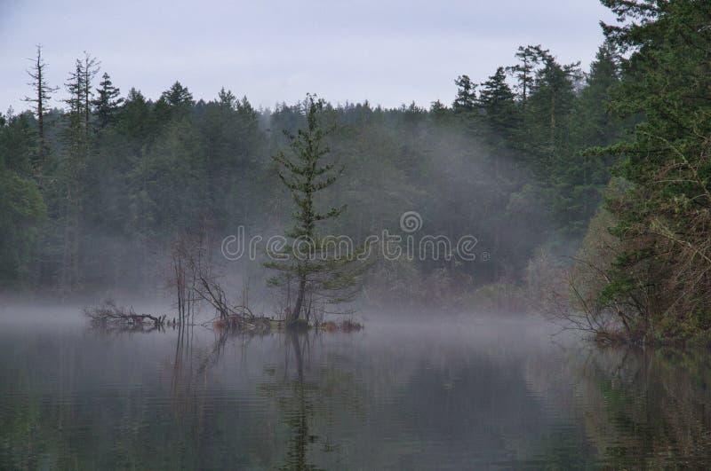 在被充斥的海岛上的杉树引人注意反对雾 免版税库存图片