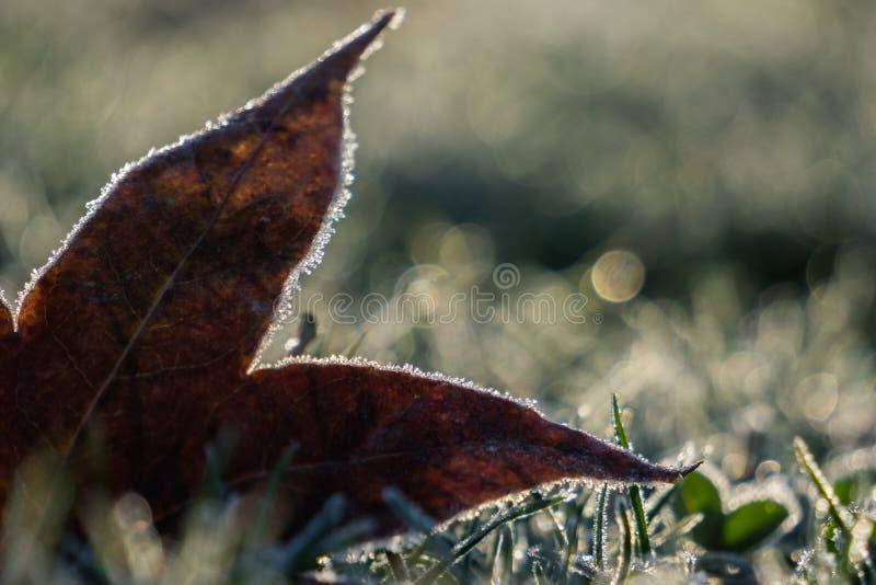 在被冰的草结霜的秋叶 库存照片