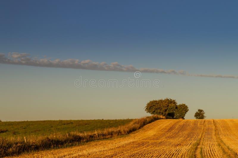 在被削减了一块金黄麦田的天际的树 免版税库存照片