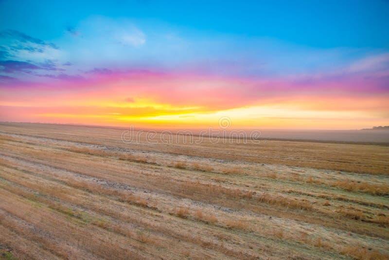 在被割的麦田的美好的晚上日落 库存照片