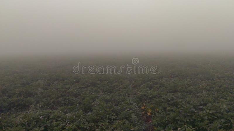 在被夺取的土豆农场的雾薄雾 免版税库存图片