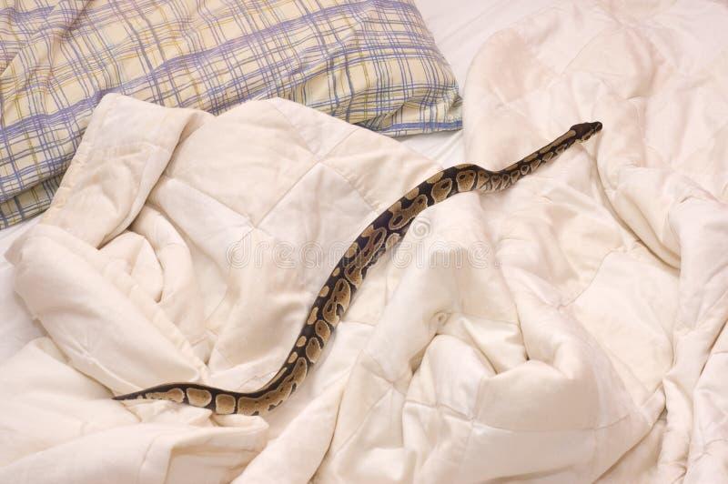 在被子的蛇 库存图片