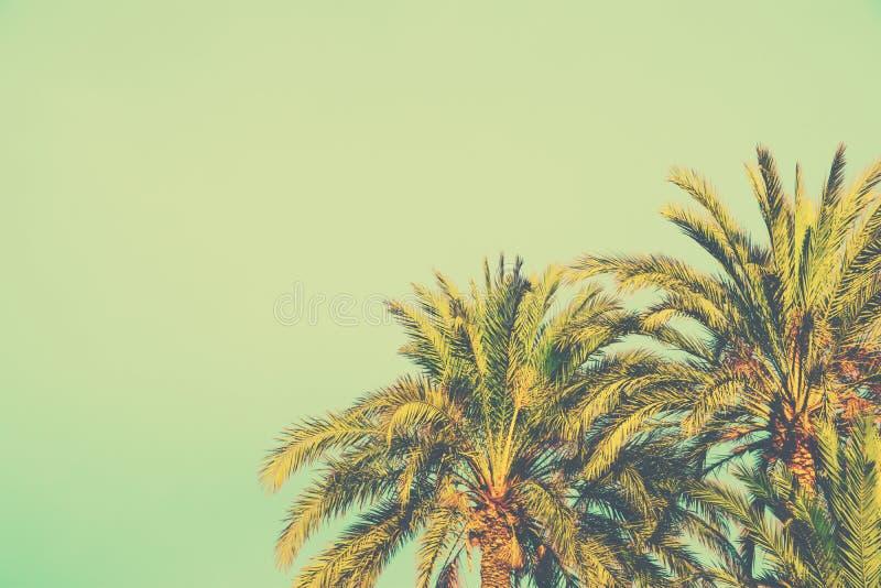 在被定调子的轻的绿松石天空背景的棕榈树 60s葡萄酒样式文本的拷贝空间 热带的叶子 海边海洋海滩 免版税库存图片