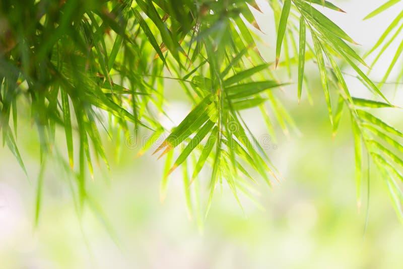 在被弄脏的绿叶背景的绿色叶子 美好的叶子纹理本质上 自然本底 免版税库存照片