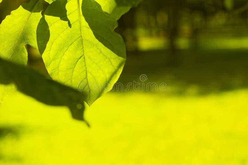 在被弄脏的背景的叶子 免版税图库摄影