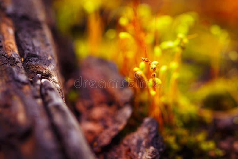 在被弄脏的背景的宏观青苔孢子 免版税库存照片
