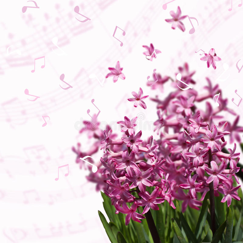 在被弄脏的背景的春天桃红色风信花与音符 免版税库存照片