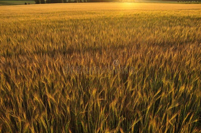 在被播种的日落的秋天 库存图片