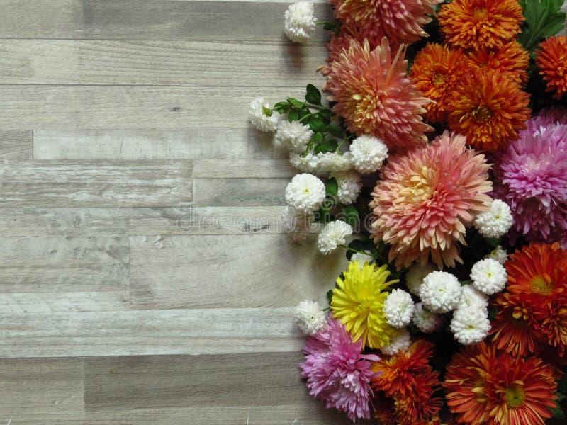 在被漂白的橡木背景的不同的充满活力的颜色菊花束 白色,黄色,桔子,桃红色,紫色菊花 免版税库存图片
