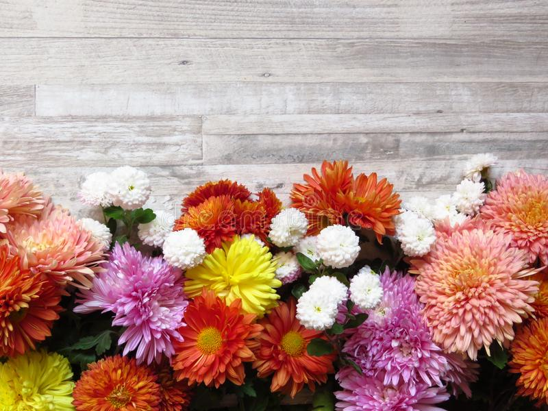 在被漂白的橡木背景的不同的充满活力的颜色菊花束 白色,黄色,桔子,桃红色,紫色菊花 免版税图库摄影