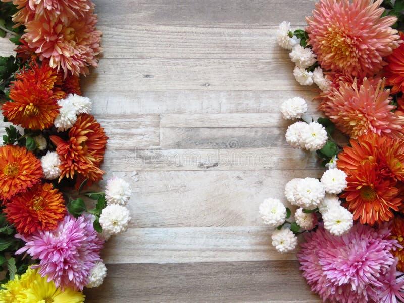 在被漂白的橡木背景的不同的充满活力的颜色菊花束 白色,黄色,桔子,桃红色,紫色菊花 图库摄影