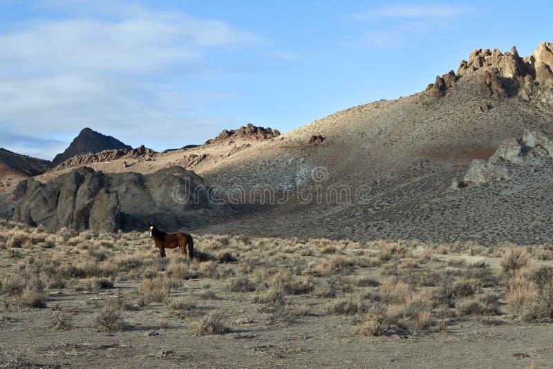 在被绘的小山的一匹孤立野生野马 库存照片
