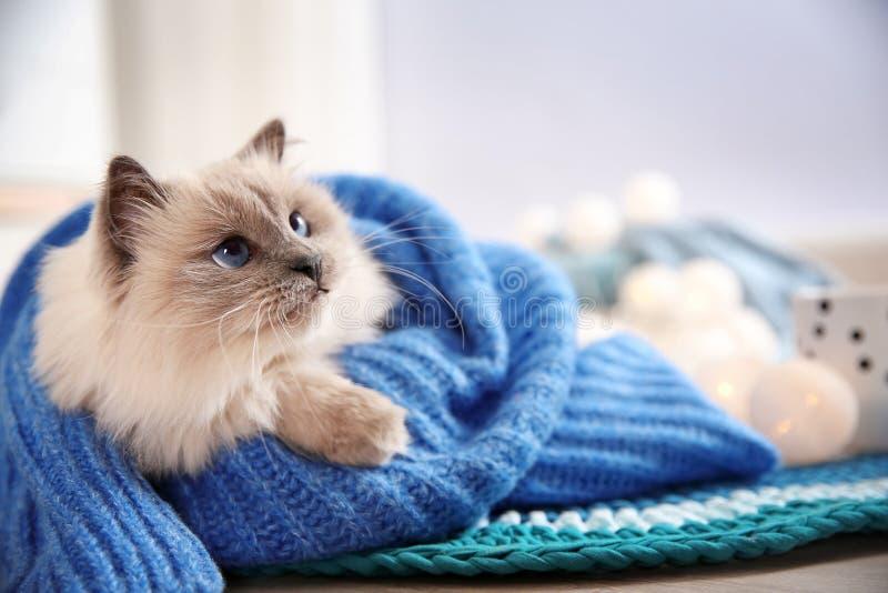 在被编织的毛线衣包裹的逗人喜爱的猫在家说谎在地板上 库存照片