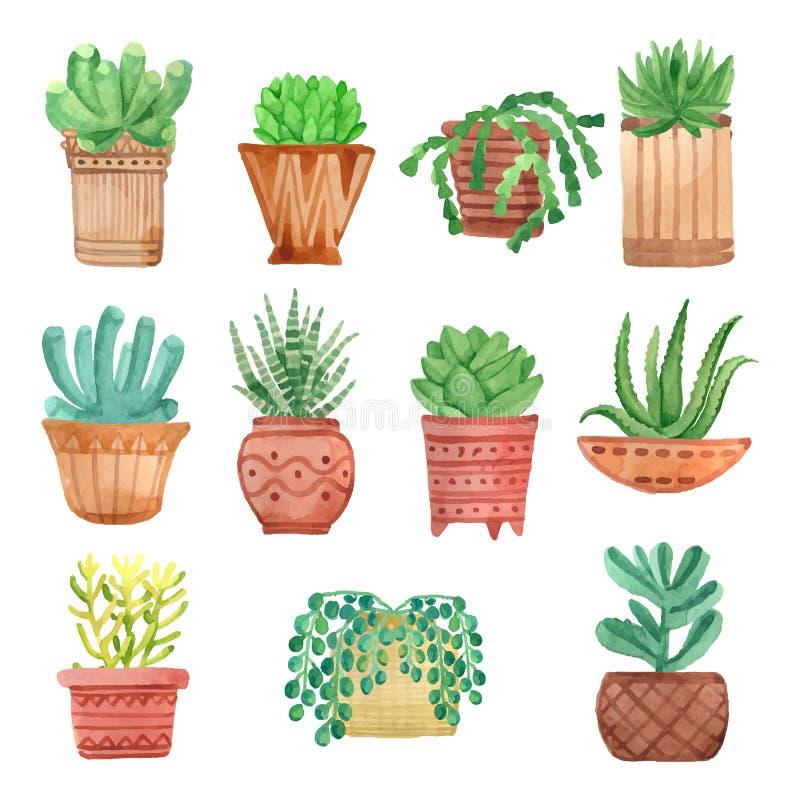 在被设置的罐的水彩室内植物 皇族释放例证