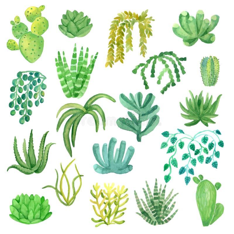 在被设置的罐的水彩室内植物 向量例证